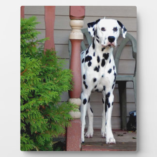 Kevin the Dalmatian Plaque