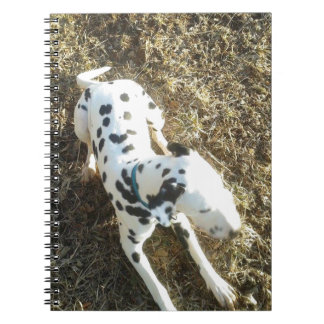 Kevin The Dalmatian Spiral Notebook