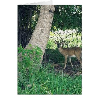 Key Deer Card