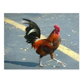 Key West Chicken Postcard