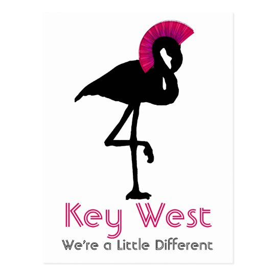 Key West Florida Flamingo Punk Rock Postcard