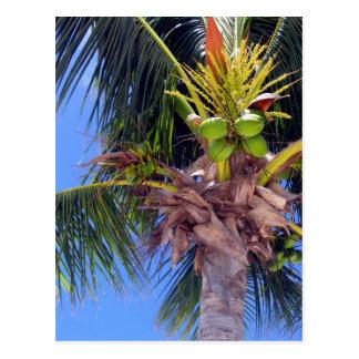 Key West Palm - Postcard