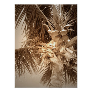 Key West Palm - Sepia Poster