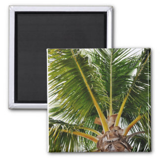Key West,Tropical, Palm Tree Magnet