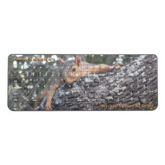 Keyboard Squirrel