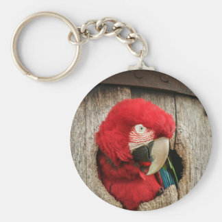 Keyring with green wing macaw parrot in barrel basic round button keychain