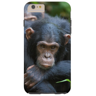 Kibale chimpanzee cell phone case