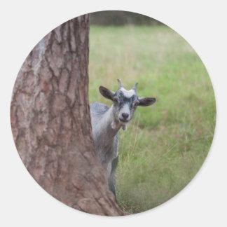 Kid (goat) Peeking From Behind a Tree Round Sticker