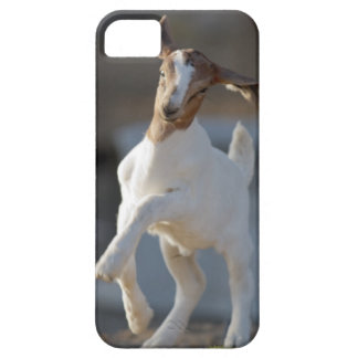 Kid Goat Playing iPhone 5 Covers