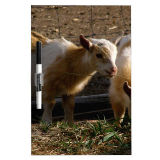 Kid Goats Dry Erase Board