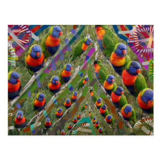 KIDS love Parrots Postcard