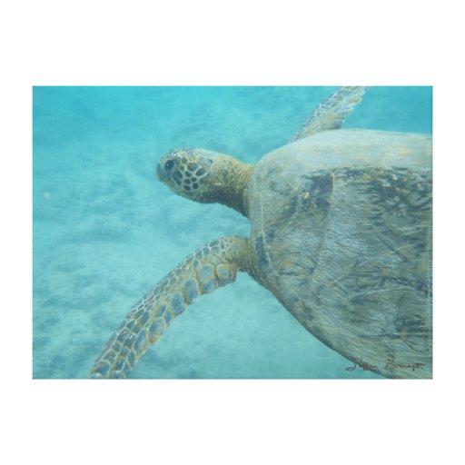 Kiholo Bay underwater sea turtle canvas print