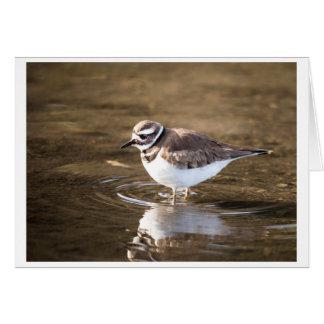 Killdeer bird. card