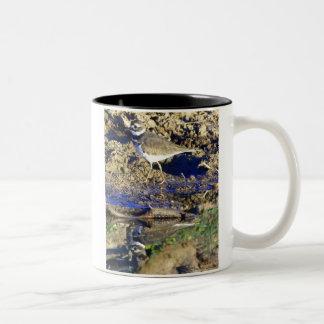 KILLDEER in Congress, Arizona Two-Tone Coffee Mug