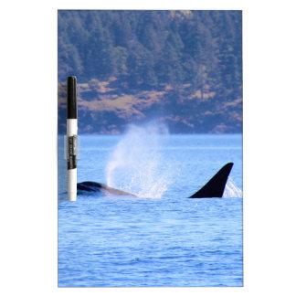 Killer Whale Dry-Erase Whiteboard