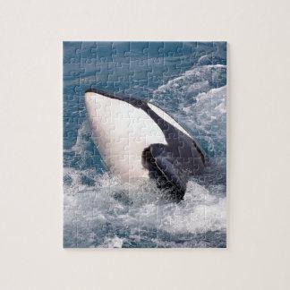 Killer whale jigsaw puzzle