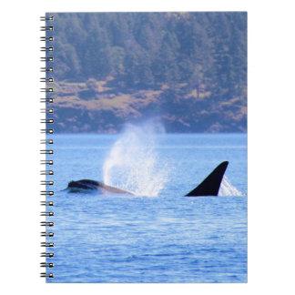 Killer Whale Note Books