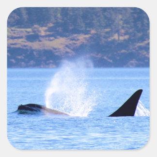 Killer Whale Square Sticker
