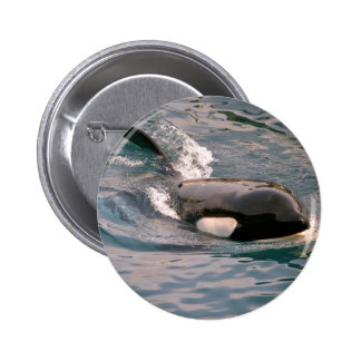 Killer whale swimming 2 inch round button