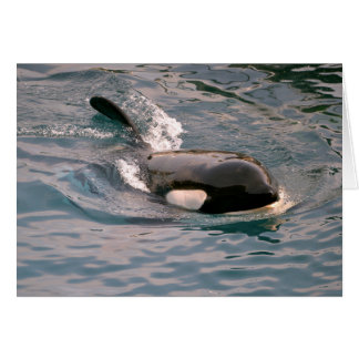 Killer whale swimming card