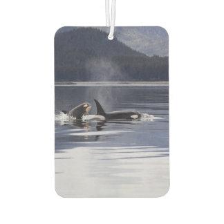 Killer Whales Air Freshener