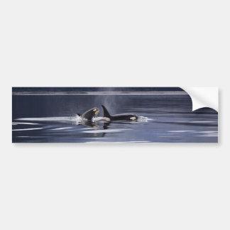 Killer Whales Bumper Sticker
