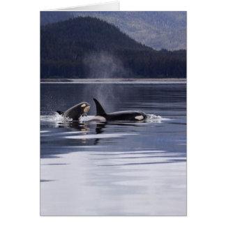 Killer Whales Card