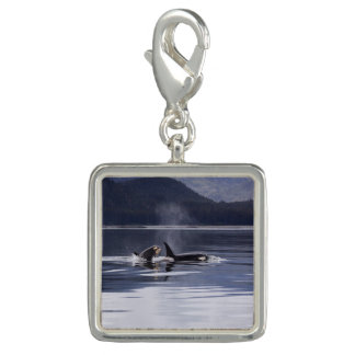 Killer Whales Charms