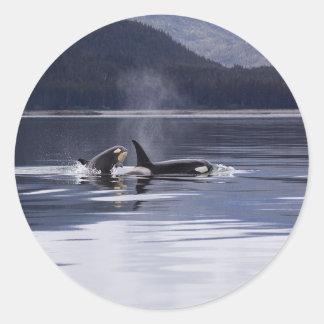 Killer Whales Classic Round Sticker
