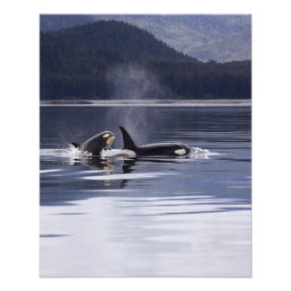 Killer Whales Flyer