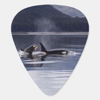 Killer Whales Guitar Pick