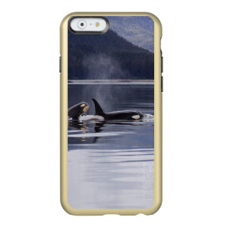 Killer Whales Incipio Feather® Shine iPhone 6 Case