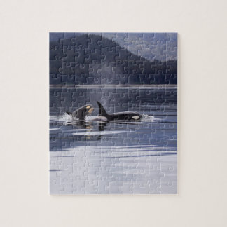 Killer Whales Jigsaw Puzzle