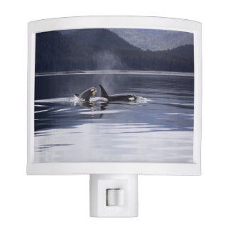 Killer Whales Night Lights