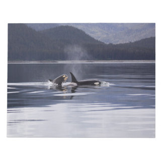 Killer Whales Notepad