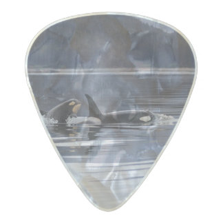 Killer Whales Pearl Celluloid Guitar Pick