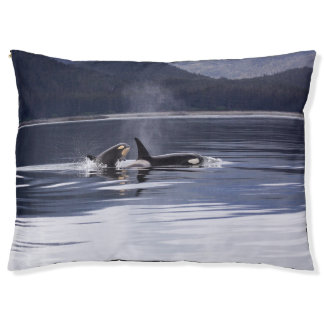 Killer Whales Pet Bed