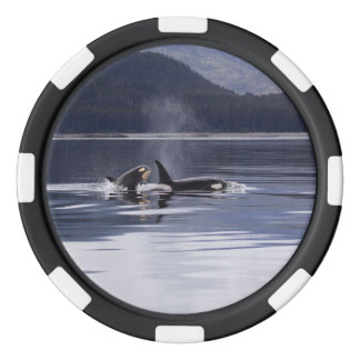 Killer Whales Poker Chips