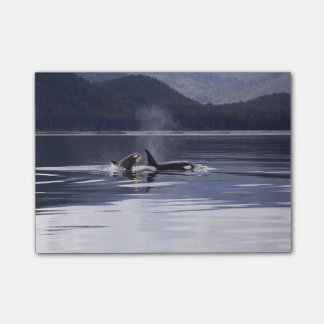 Killer Whales Post-it Notes