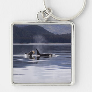 Killer Whales Silver-Colored Square Keychain