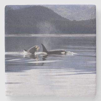 Killer Whales Stone Beverage Coaster