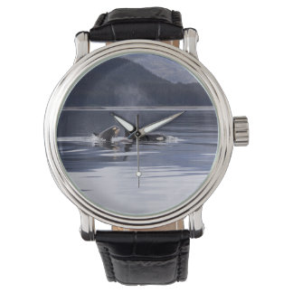 Killer Whales Watch