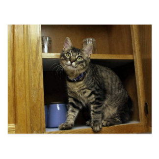 Kimber in Cupboard Postcard