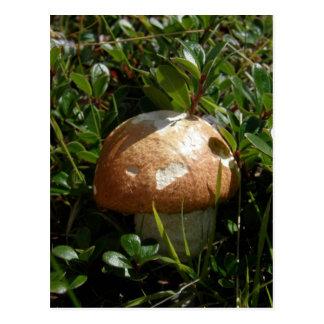 King Boletus Mushroom, Unalaska Island Postcard