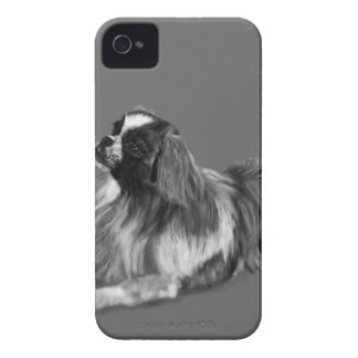 King Charles Spaniel iPhone 4 Covers