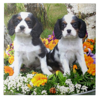 King Charles Spaniel puppies Tile