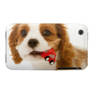 King Charles Spaniel with red car in her mouth. iPhone 3 Covers