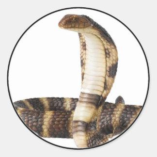 """""""King Cobra 1"""" Round Sticker"""