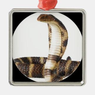 """""""King Cobra 1"""" Silver-Colored Square Ornament"""