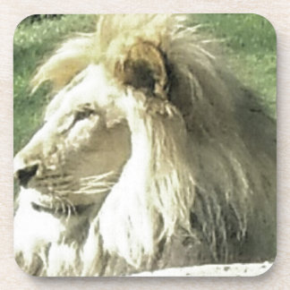 King of Beasts Coaster